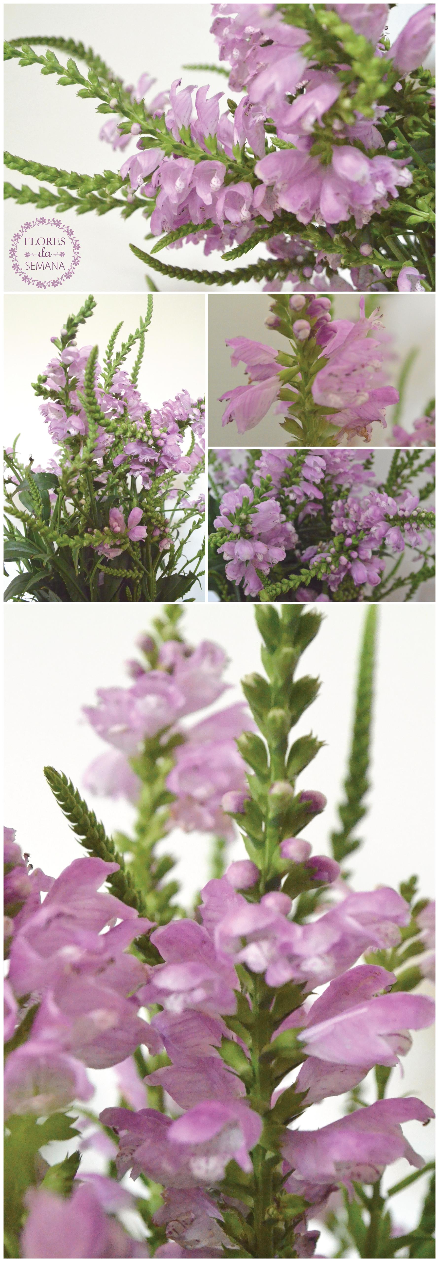 flores-08